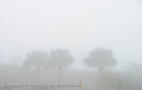 1227-0014-Yuccas-In-The-Fog
