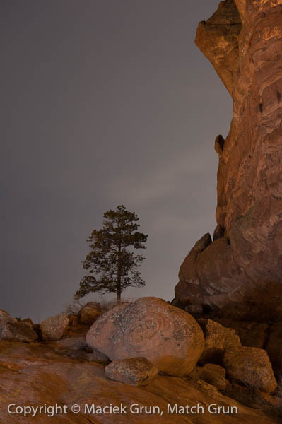 1233-0167-Lone-Pine-Against-The-Night-Sky-Red-Rocks