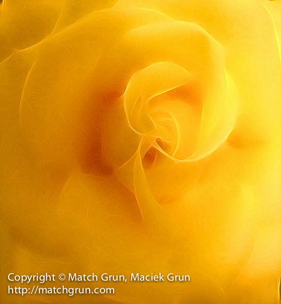 ip4s-4336-Soft-Yellow-Rose