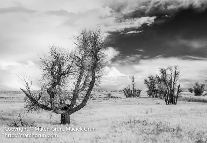 1548-0115-Trees-And-Departing-Storm-Along-County-Road-90