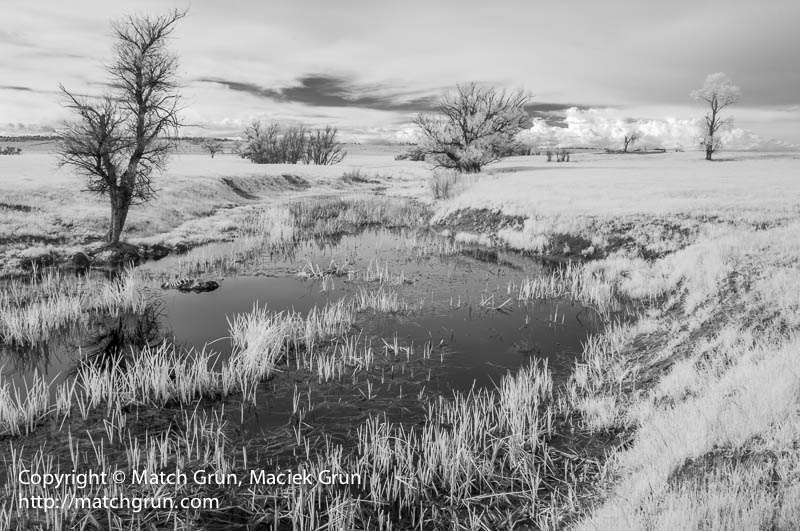 1548-0123-Pond-Along-County-Road-90