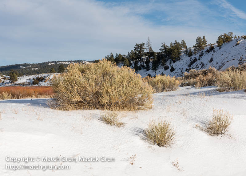 1708-0014-Rabbit-Brush-Bush-And-Snow-Bank-La-Veta-Pass