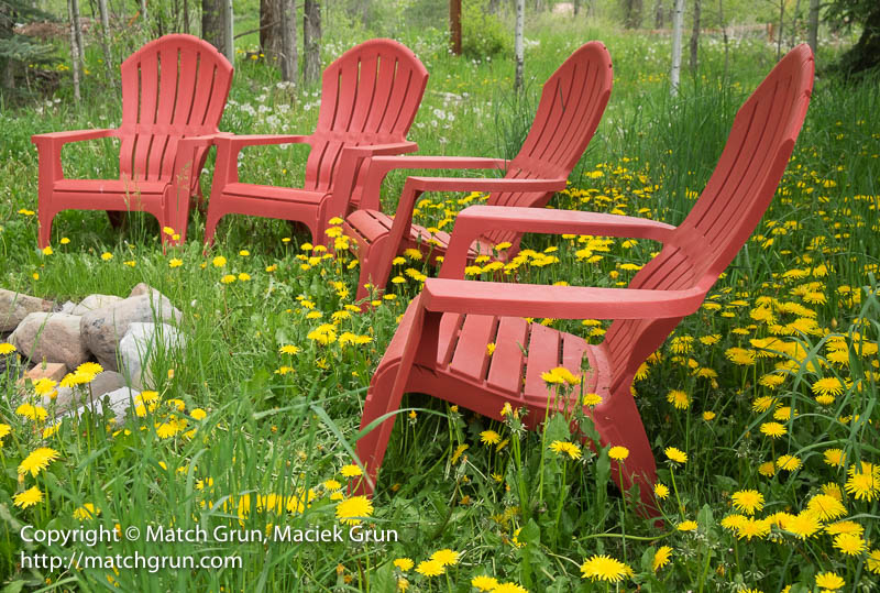 1774-0040-Red-Garden-Chairs-Among-The-Dandelions