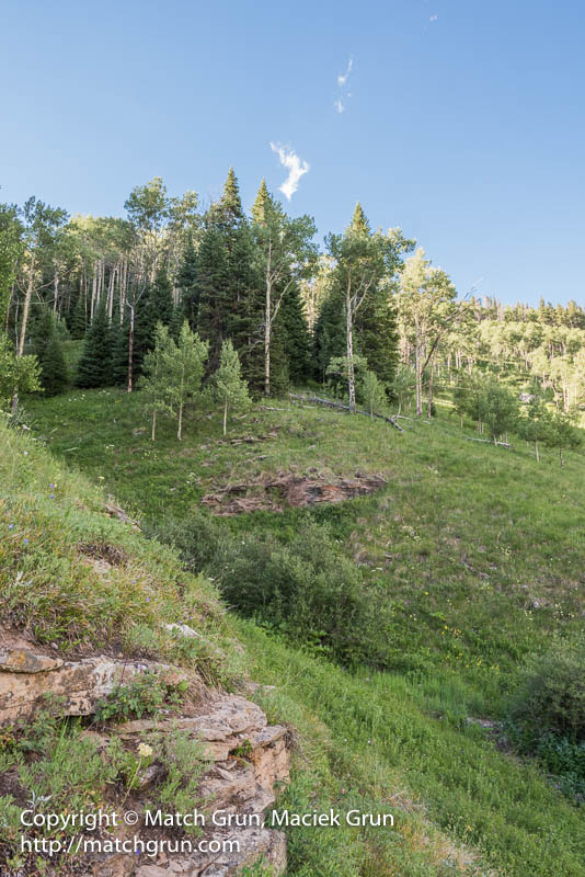 1783-0042-Aspen-Forest-And-Cliff-Shrine-Pass