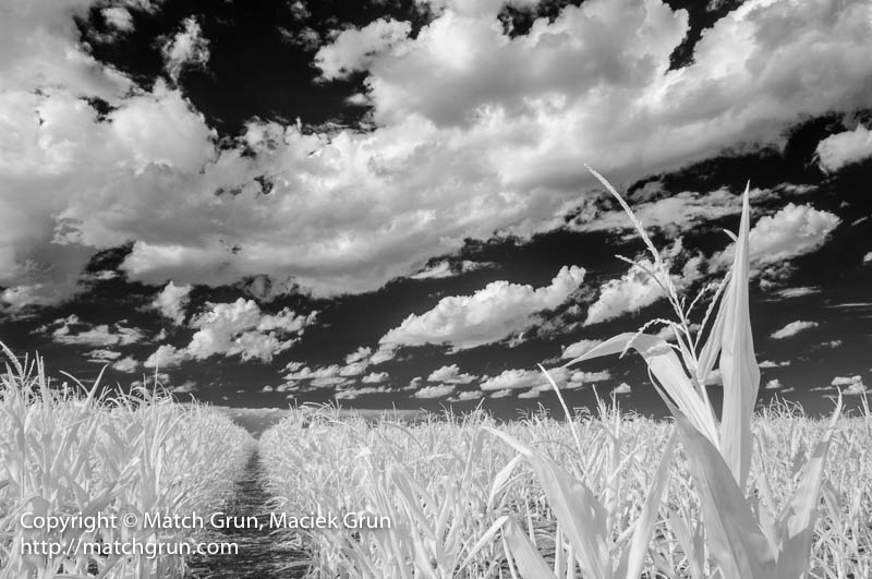 1792-0018-Corn-Field-No-3