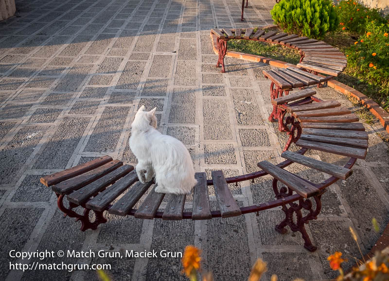 1835-0039-White-Cat-On-Circle-Bench-At-Sunrise