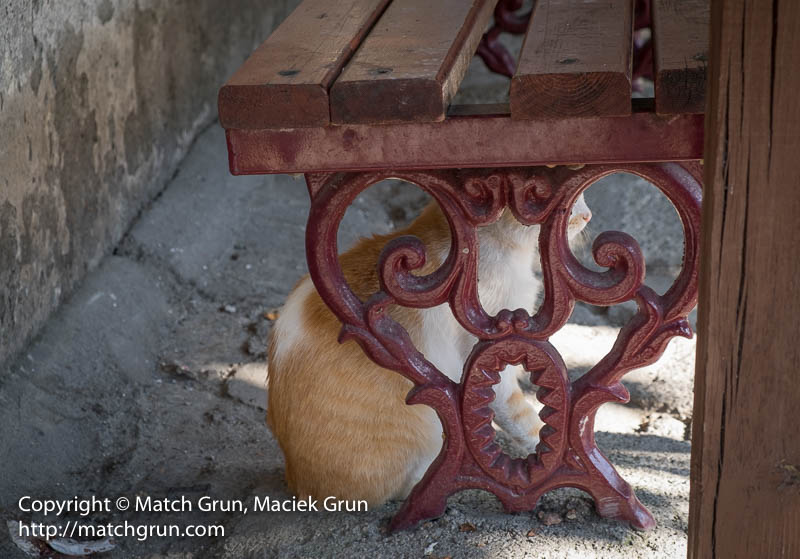 1835-0122-Cat-Under-Bench-Safranbolu