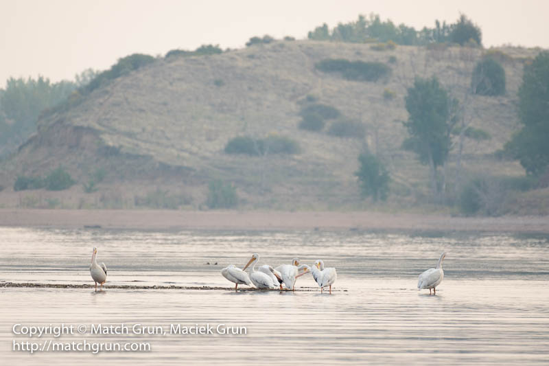 1992-0020-Pelicans-At-Chatfield-State-Park