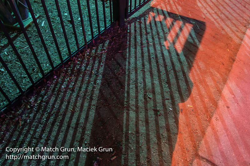 2100-0089-Fence-Shadows-And-Light